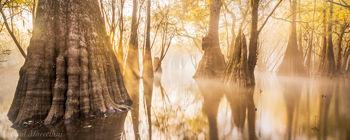 fog, suwannee valley, florida, , nature, photography