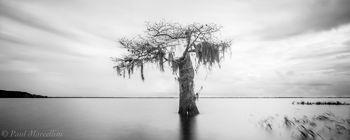 cypress, florida, nature, photography