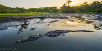 robert's lake, big cypress national preserve, alligator, gator, swamp
