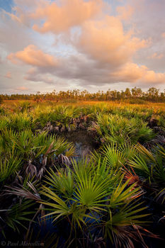 everglades, palmetto, serenoa repens, sunset, Florida, nature, photography, florida national parks