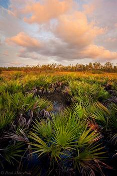 everglades, palmetto, serenoa repens, sunset, Florida, nature, photography, florida national parks