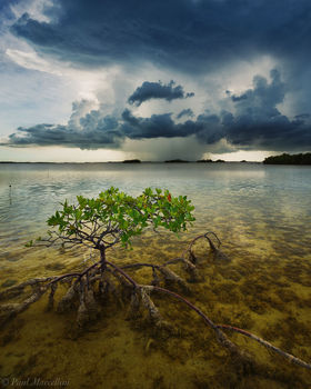 Great White Heron National Wildlife Refuge, summerland key, florida keys, storm, mangrove, florida, nature, photography