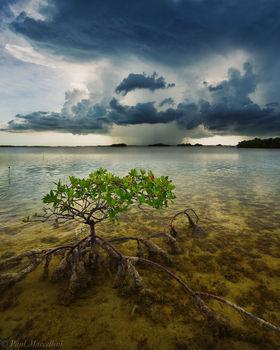 Great White Heron National Wildlife Refuge, summerland key, florida keys, storm, mangrove, florida, nature, photography