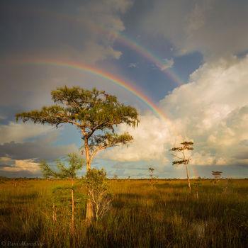 rainbow, everglades, florida, nature, photography, florida national parks