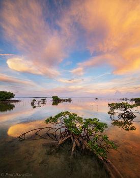 Sugarloaf Key, National Key Deer Refuge, Florida Keys, FL, red mangroves, sunrise, keys, florida, south florida, nature, photography