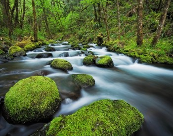 gorton creek, oregon, columbia, river, gorge