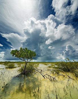 Big Pine Key, Florida Keys, Florida, key deer refuge, mangrove, keys, storm, south florida, nature, photography