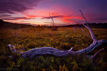 salt marsh, everglades, florida, nature, photography, florida national parks