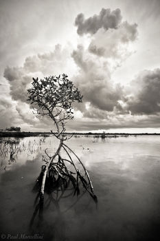 storm, mangrove, big pine key, florida keys, florida, keys, south florida, nature, photography,