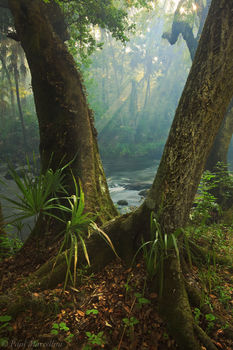 trees, hillsborough river, sunlight, rays, florida, south florida, nature, photography