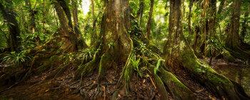 belize, kaway trees, jungle