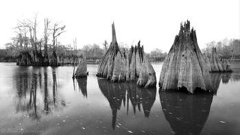 dead lakes, chipola river, cypress, florida, north florida, nature, photography