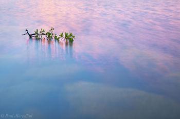 buttonwood, everglades, lake, Florida, nature, photography, florida national parks