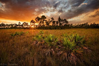 everglades, pinelands, sunset, storm, Florida, nature, photography, florida national parks