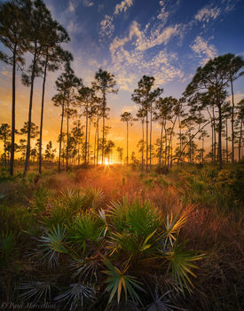 pineland, grasses, everglades, florida, nature, photography, florida national parks
