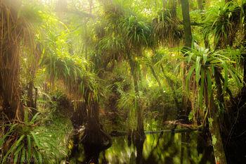 Fakahatchee, Strand Preserve State Park, guzmania monostachia, epiphyte, bromeliad, Fakahatchee Strand Preserve State Pa, florida, south florida, nature, photography,