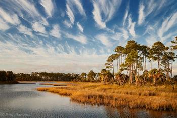 Econfina River, Nature Coast, Florida, pines, cirrus, horse tails, clouds, marsh, salt, north florida, nature, photography