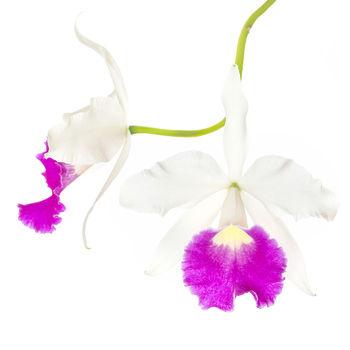 flower, tropical, flora,