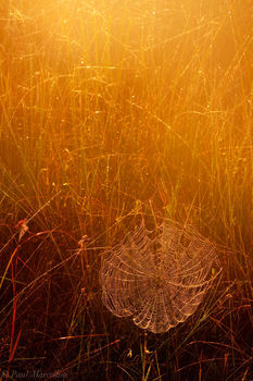 spiderweb, everglades, morning, dew, Florida, nature, photography, florida national parks