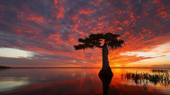 Florida Panoramas