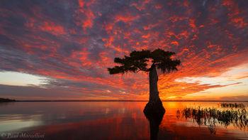 Blue Cypress Lake, FL, cypress, florida, south florida, nature, photography