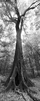 oak, Suwannee River State Park, florida, nature, photography