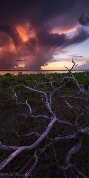 Little Torch Key, Florida Keys, Florida, branches, keys, south florida, nature, photography