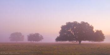 morning, fog, oaks, venus, florida, south florida, nature, photography