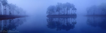 everglades, sunrise, pines, foggy, Florida, nature, photography, florida national parks