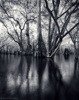 Suwannee River Valley, Florida, trees, backwaters, north florida, nature, photography