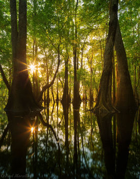 Suwannee River, Manatee Springs State Park, Florida, north florida, nature, photography