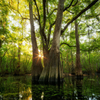 flooded, backwoods, sunrise, swamp, florida, north florida, nature, photography