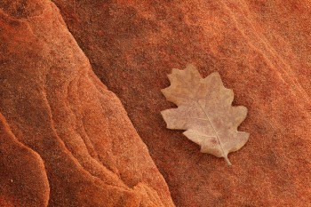 Glen Canyon National Recreation Area, Arizona, leaf