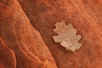 Glen Canyon National Recreation Area, Arizona, leaf