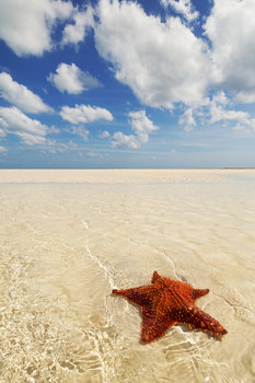 grand bahamas, deep water cay, cushion star,