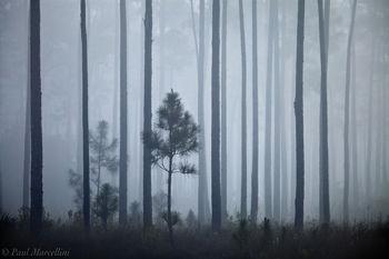 everglades, pines, fog, morning, Florida, nature, photography, florida national parks