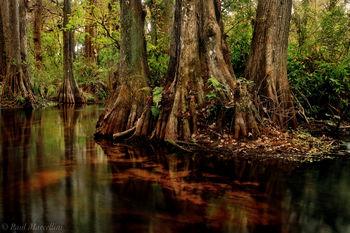 loxahatchee, river, florida, south florida, jupiter, nature, photography