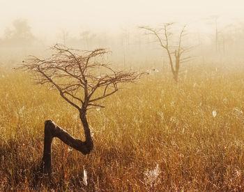 dwarf cypress, everglades, foggy, Florida, nature, photography, florida national parks