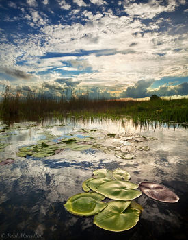 Nuphar lutea, spatterdock, Everglades National Park, Florida, nature, photography, florida national parks