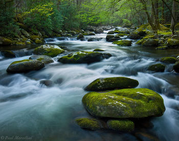Great Smoky Mountains National Park, Tennessee, tremont, smokies