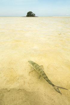 bonefish, bahamas, deep water cay, shallows,
