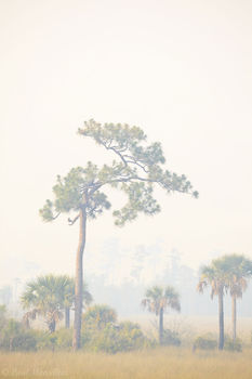 big cypress, fire, smoke, trees, Florida, nature, photography