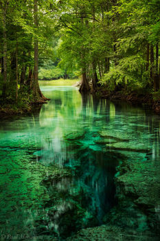 little devil spring, santa fe river, north florida, florida, spring, nature, photography
