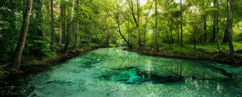 dogwood springs, santa fe river, florida, nature, photography