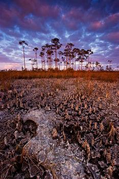 everglades, pinelands, sunset, periphyton, dry season, Florida, nature, photography, florida national parks