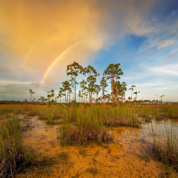 rainbow, rocky pinelands, everglades national park, florida, nature, photography, florida national parks