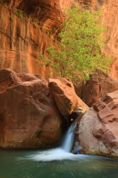 Virgin River Narrows, Zion, National Park, Utah,