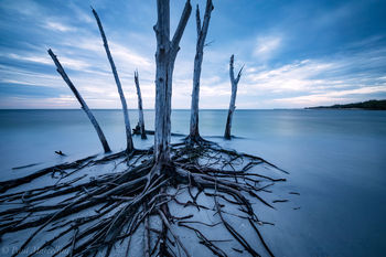 longboat key, florida, nature, photography,