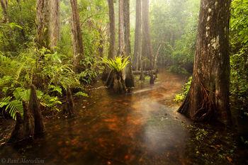 thunderstorm, big cypress, rain, misty, river, stream, Florida, nature, photography