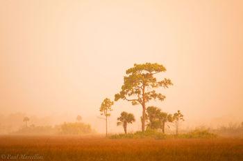 big cypress, rain, pines, sunset, Florida, nature, photography, florida national parks